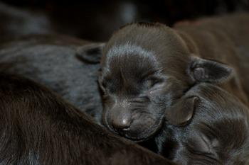 Pictures Puppies